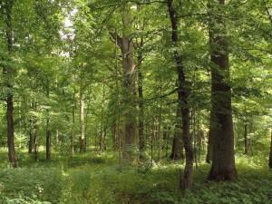 Kokia kaina parduoti turimą mišką?